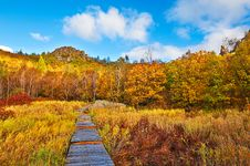 Free The Path Of Autumn Forest Royalty Free Stock Image - 34520716
