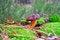 Free Boletus Mushroom In Moss Stock Photography - 34521732