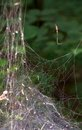 Free Spider Web Without Spider  On Tree Royalty Free Stock Image - 34531516