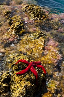 Free Starfish Royalty Free Stock Images - 34579969