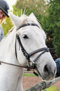 Free Girl Rider On A Horse Stock Photo - 34580630