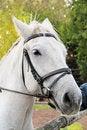 Free White Horse Stock Photos - 34580633