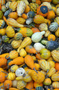 Free Colorful Autumn Gourds Stock Images - 34587234
