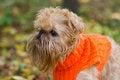 Free Dog And Autumn. Stock Photo - 34591460