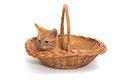 Free Orange Kitten Sitting In A Basket Royalty Free Stock Images - 34591519
