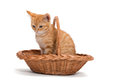 Free Orange Kitten Sitting In A Basket Stock Photos - 34591523