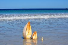 Beautiful Beach With Large Cone Shells Vertical