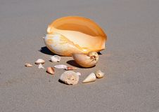 Shell Collection On The Beach