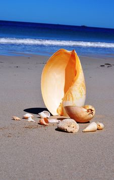 Free Shell Collection On The Beach Royalty Free Stock Photos - 34591148