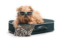 Dog Traveler Stock Photos