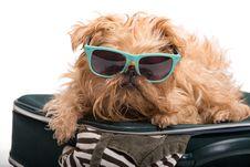 Dog Traveler Stock Image