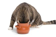 Free Hungry Tabby Cat Royalty Free Stock Photos - 34591448