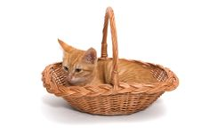 Free Orange Kitten Sitting In A Basket Royalty Free Stock Images - 34591519