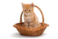 Free Orange Kitten Sitting In A Basket Royalty Free Stock Photography - 34591527