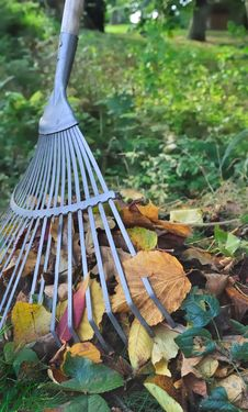Pick Dead Leaves Stock Images