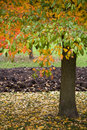 Free Autumn Leaves Royalty Free Stock Images - 3460369