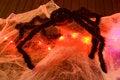 Free Spider Halloween Decoration Stock Photography - 3462072
