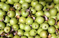 Free Granny Smith Apples Stock Image - 3466111