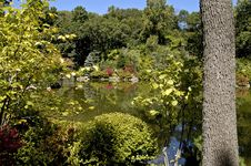 Japanese Garden 3 Stock Photo