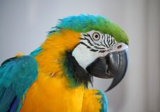 Free Parrot Journalist Stock Image - 3460571
