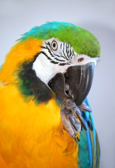 Free Parrot Showing Claws Stock Photography - 3460642