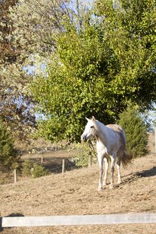 Free Horse Near  Fence Royalty Free Stock Images - 3461859