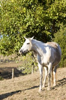 Free Horse In Pasture Royalty Free Stock Images - 3461869