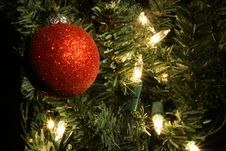Free Red Ball In Lighted Tree Stock Photos - 3461883
