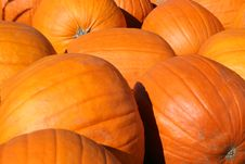 Free Pile Of Pumpkins Royalty Free Stock Images - 3461939