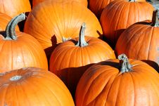 Free Pile Of Pumpkins Stock Images - 3461944