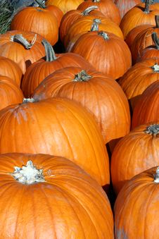 Free Pumpkins Royalty Free Stock Images - 3461949