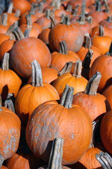 Free Pumpkins Stock Image - 3461951