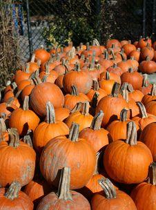 Free Pumpkins Stock Image - 3461991