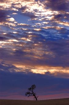 Lone Tree At Sunset Royalty Free Stock Photos