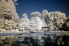 Infrared Photo – Tree And Pond Royalty Free Stock Images