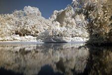Free Infrared Photo – Tree And Lake Stock Photo - 3462470