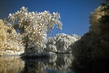 Infrared Photo – Tree And Lake Royalty Free Stock Photos
