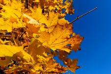 Free Leaves Against Blue-sky Stock Images - 3463234