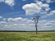 Meadow, Tree And Clouded Sky 3 Royalty Free Stock Photography
