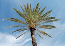 Free Palmtree Stock Images - 3464534