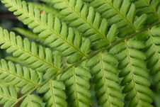 Free Leaf Texture Stock Photo - 3465860