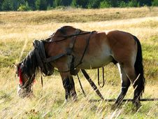 Free Horse In A Meadow Royalty Free Stock Images - 3466019