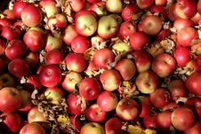 Free Ida Red Apples Stock Photos - 3466083
