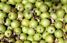Free Granny Smith Apples Stock Image - 3466111