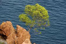 Pin Tree Stock Photos