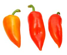 Free Peppers Royalty Free Stock Photography - 3466407