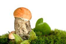 Free Orange-cap Mushroom Royalty Free Stock Images - 3466549