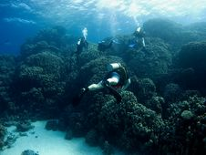 Free Diver Over Coral Reef Stock Photo - 3467900