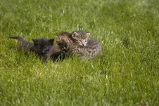Free Kitty Stock Photography - 3468112