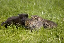 Free Kitty Stock Photography - 3468172